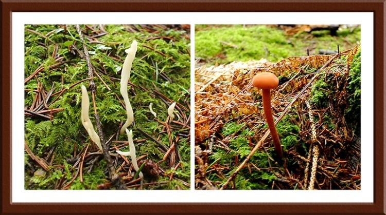 fungi on ground at Becks
