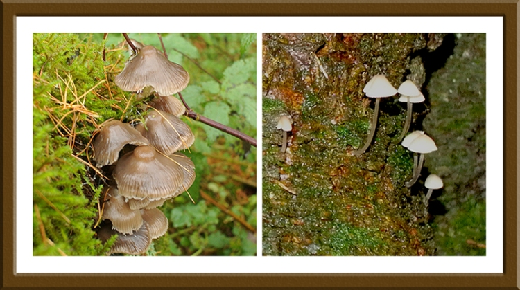 fungi on trees at Becks