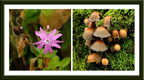 flower and fungi