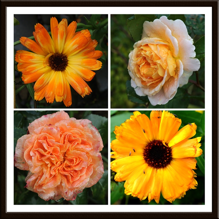 rose and marigold