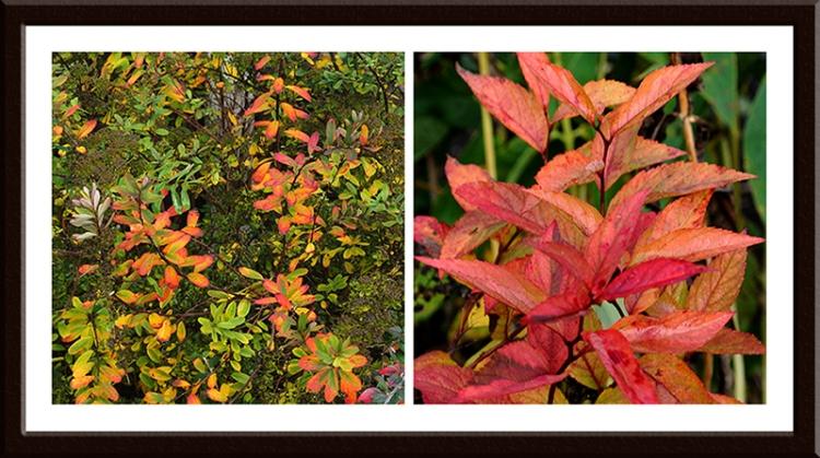 leaves in garden