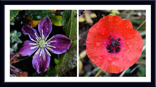 clematis and poppy