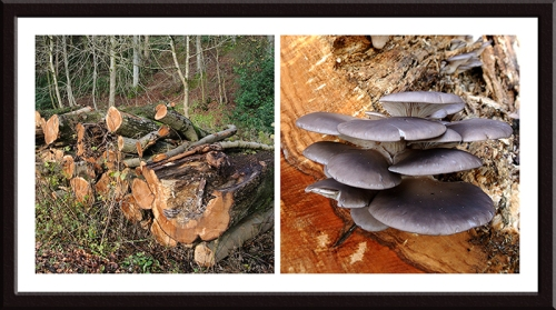 cut wood with fungus