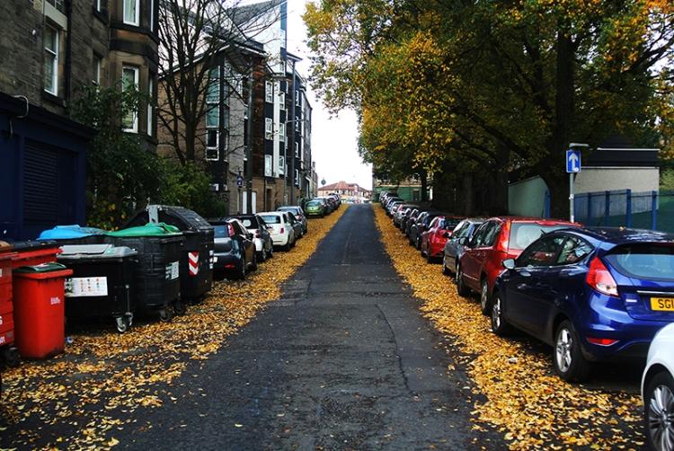 leaves in edinburgh