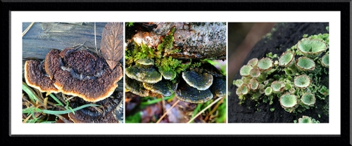 fungus and lichen