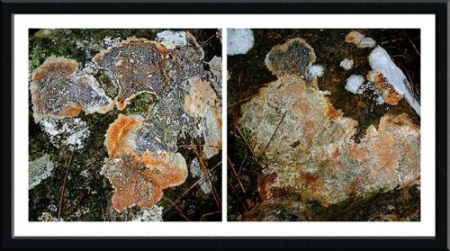 Lichen boulders