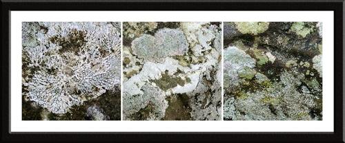 lichen at Byreburn