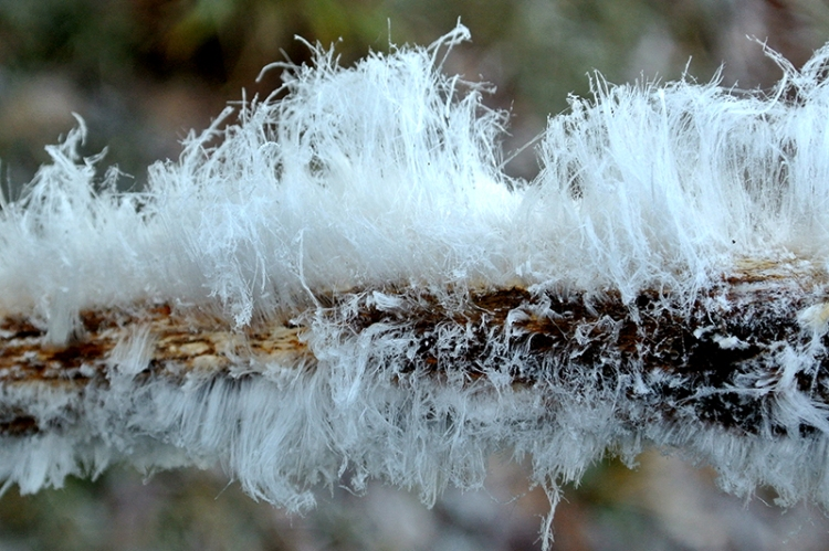 hair frost