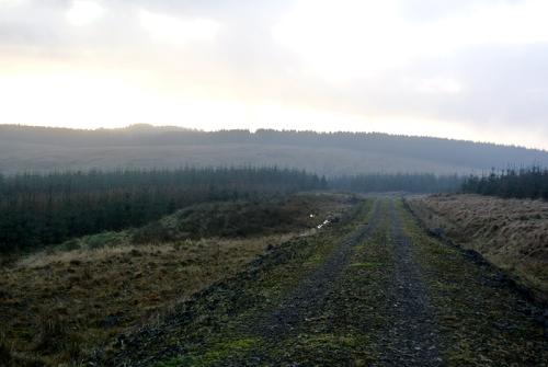Callister track