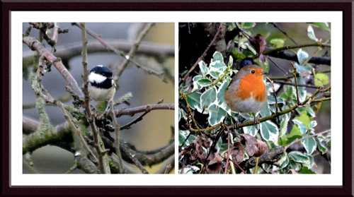 coal tit and robin