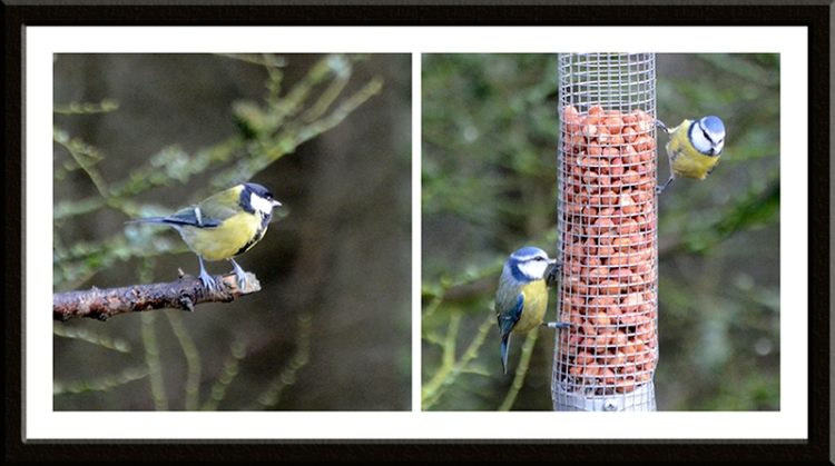 great tit and blue tits