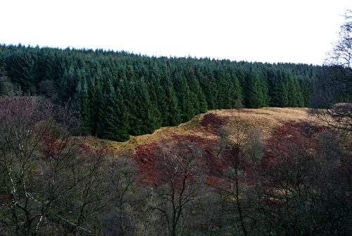 Tarras trees