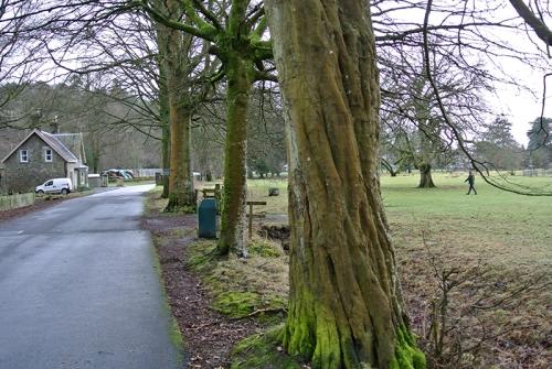 Lodge walk tree