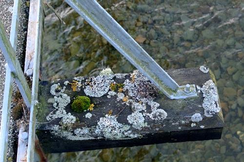 suspension bridge lichen