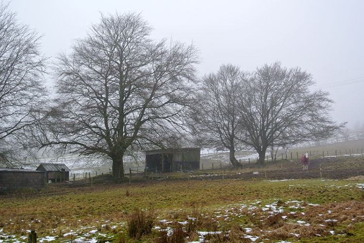Trees and shed