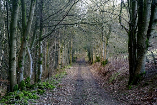 Longfauld top path