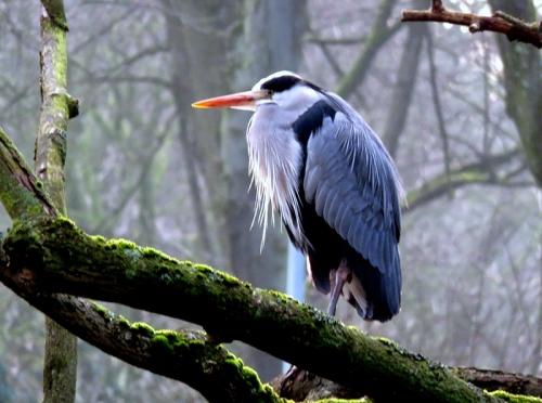Mr Grumpy in The Vondelpark