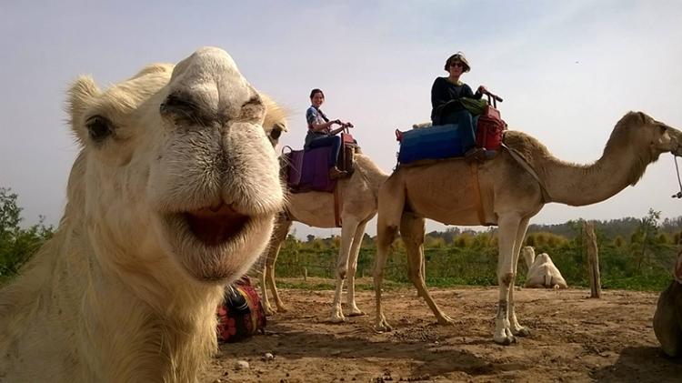 Camel in Morroco with Sue