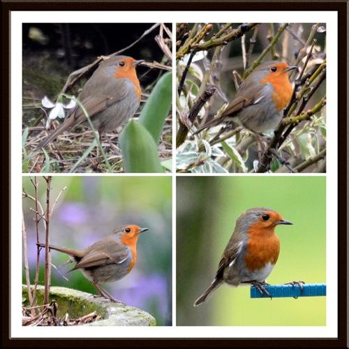 robin's progress