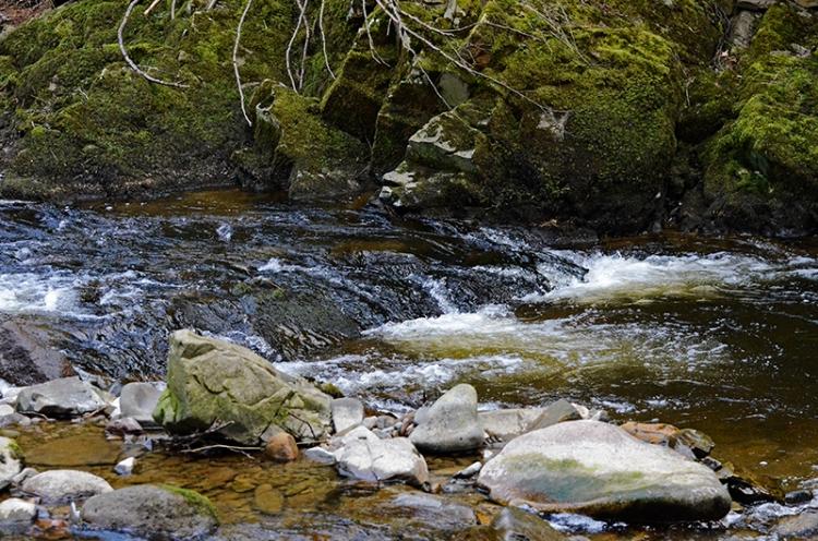 Wauchope river