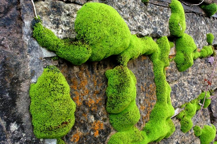 moss at Byreburn