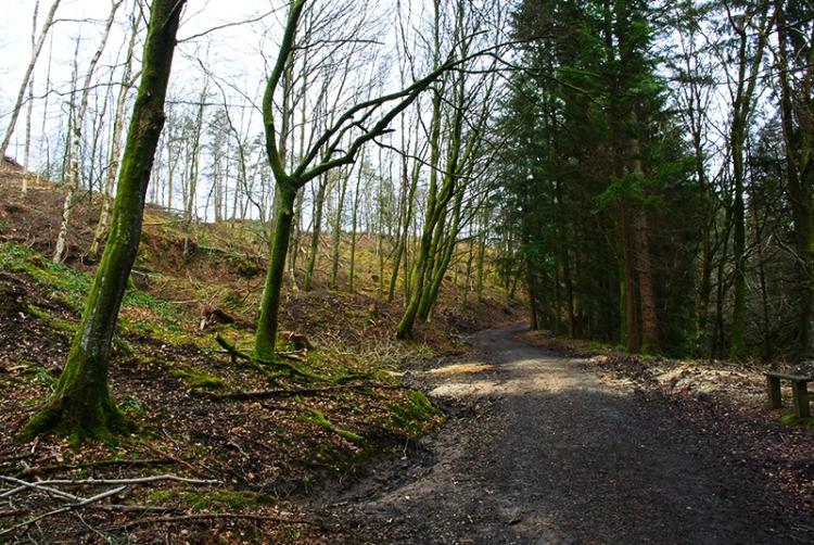 Byreburn wood