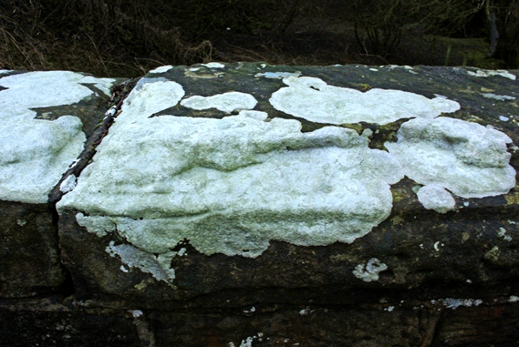 lichen on wall