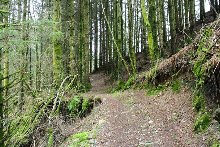 wood at Hillhead