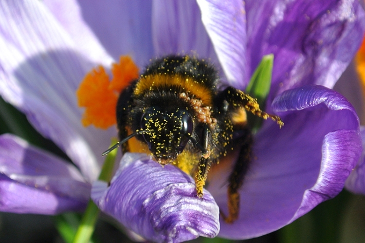 the first bee of the year