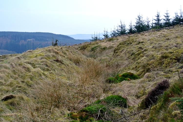 Bessie's Hill ditch