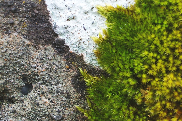wall with moss and lichen