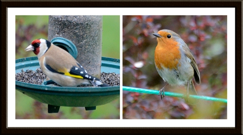 goldfinch and robin