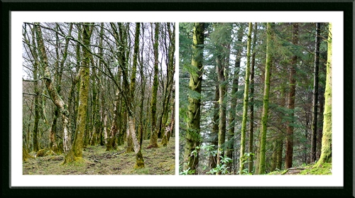 two woods on castle Hill