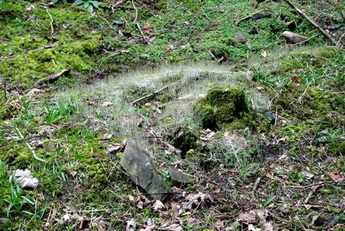 fungus site