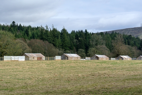 pheasant huts