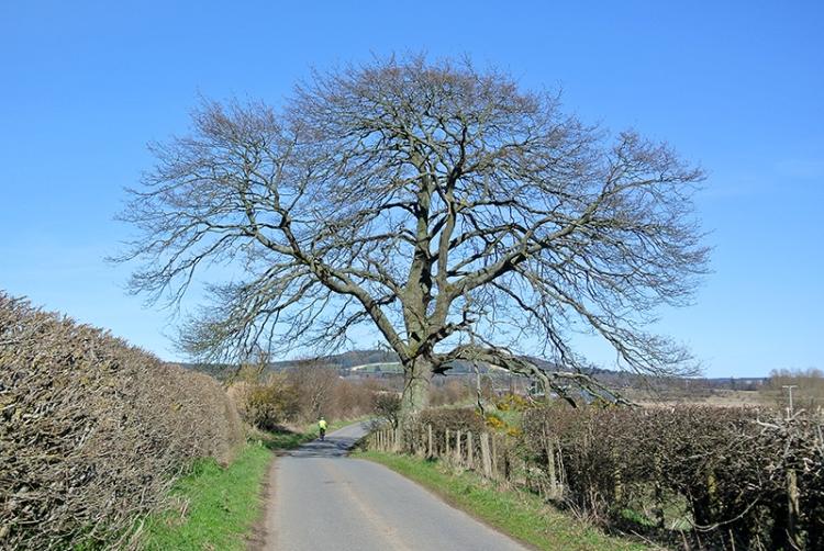 tree near Denholm