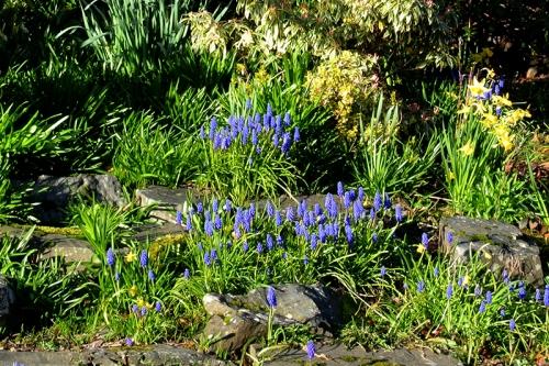 Clinthead Garden