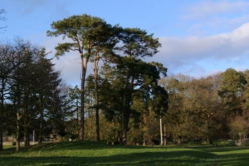 Castleholm Pines