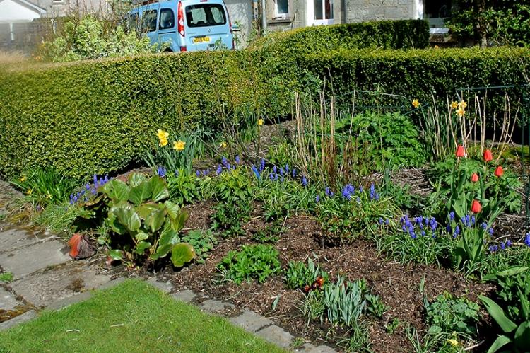 stream of hyacinths