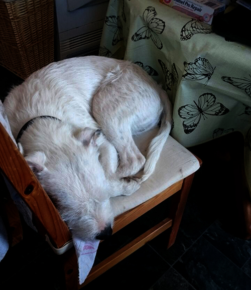 snoozing dog