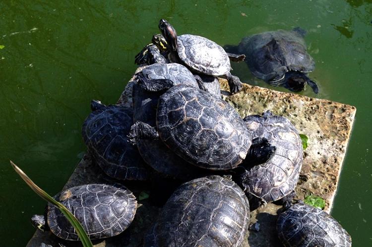 malta turtles