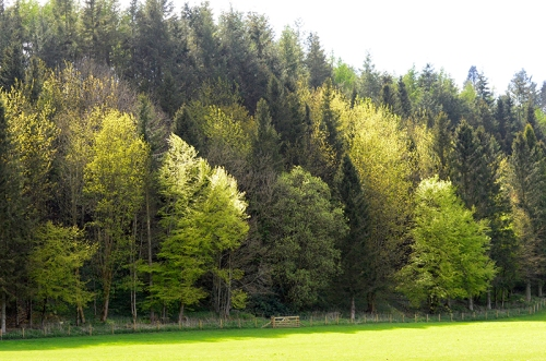 Murtholm trees
