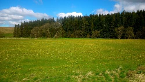 Paddockhole field