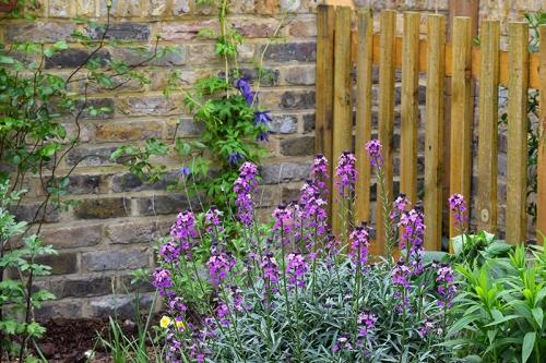 Annie's garden