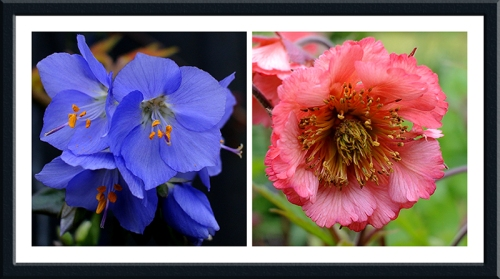 jacob's Ladder and geum