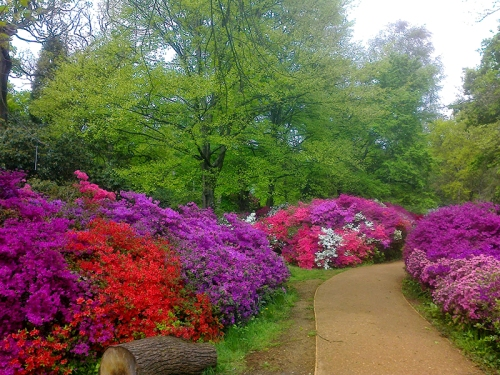 Isabella Plantation, Richmond Park 2015 032
