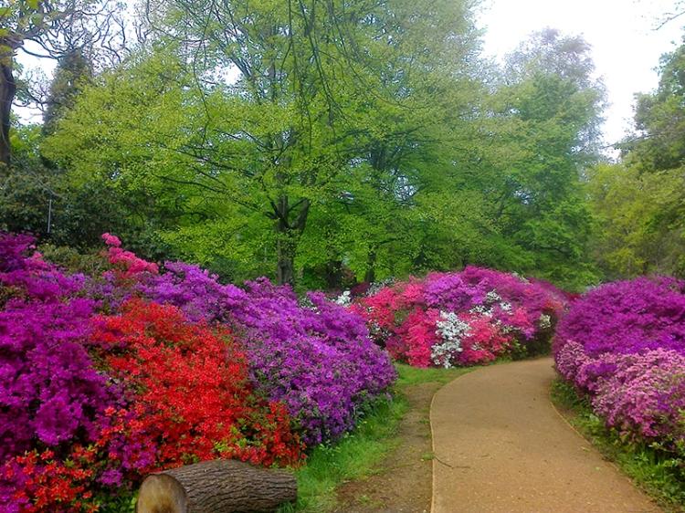 Isabella Plantation, Richmond Park 2015 032