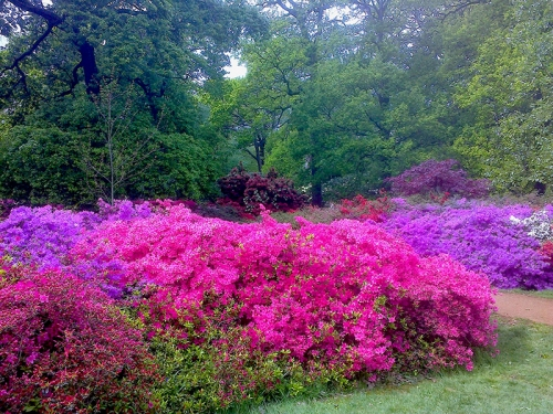 Isabella Plantation, Richmond Park 2015 035