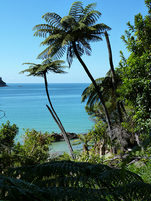 Abel Tasman trail