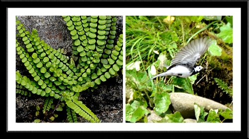 fern and wagtail